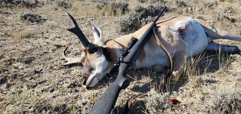 My Buck Antelope 2021