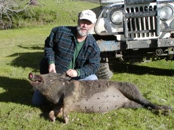 Wild Pig, 2005