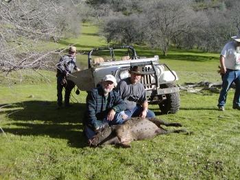 Wild Pig 2005